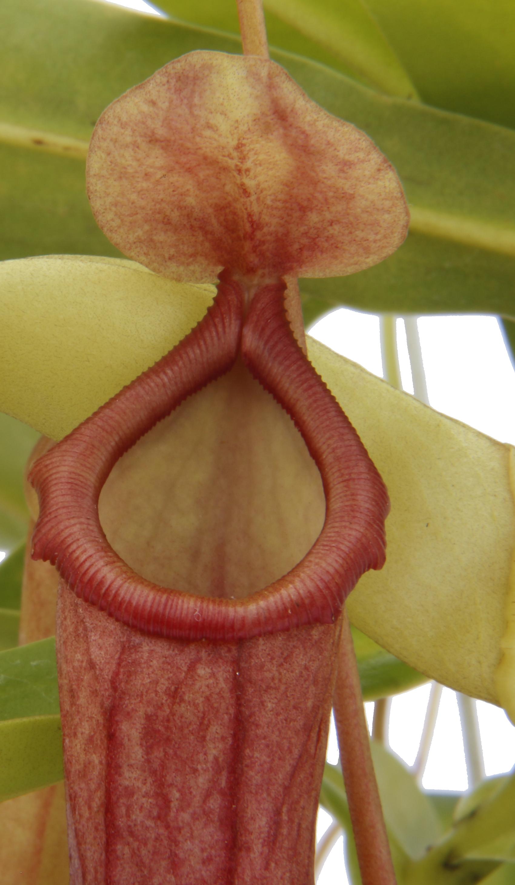 Ecovoraz